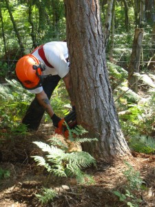 tree felling services in pretoria gauteng